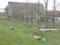 piershil-kostverlorendijk-26maart2006-14