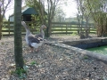 piershil-kinderboerderij-1april2007-15
