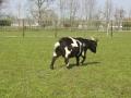 piershil-kinderboerderij-1april2007-24