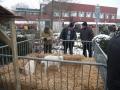 piershil-kerstmarkt-2009-18