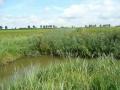 polder-klein-piershil-14aug2009-04