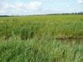 polder-klein-piershil-14aug2009-08