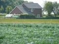 polder-klein-piershil-14aug2009-16