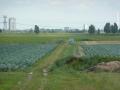polder-klein-piershil-14aug2009-19