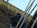 piershil-kerktoren-duivenwering-3mei2011-13