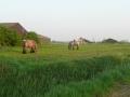 piershil-foto-eilandje-24april2011-04