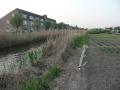 piershil-foto-eilandje-24april2011-20