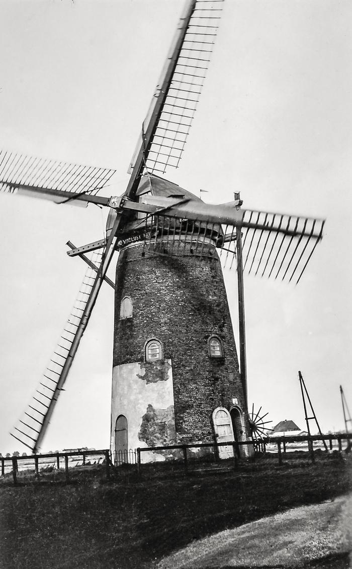 nieuw-beijerland-molen-windlust-circa1950