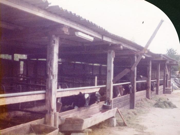 piershil-boerderij-klaasenad-11