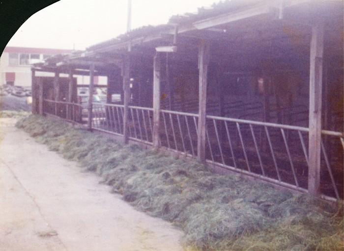 piershil-boerderij-klaasenad-12