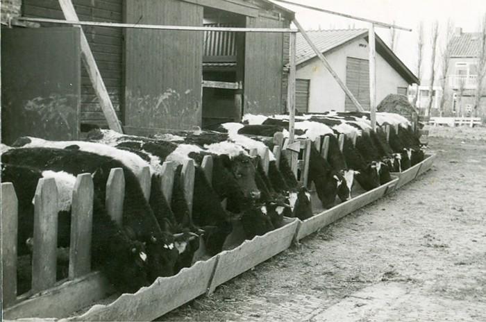 piershil-boerderij-klaasenad-13