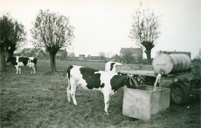 piershil-boerenbedrijf-vanbergeijk-02-sluisjesdijk