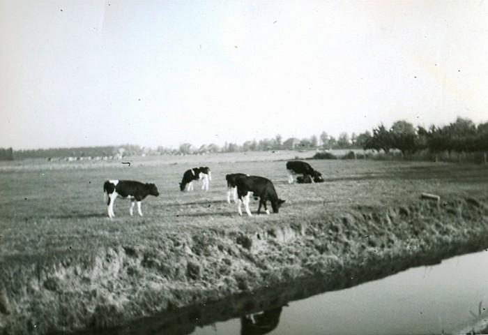 piershil-boerenbedrijf-vanbergeijk-14