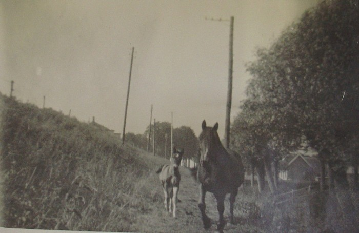 piershil-foto-beatrixstraat-paarden-1934