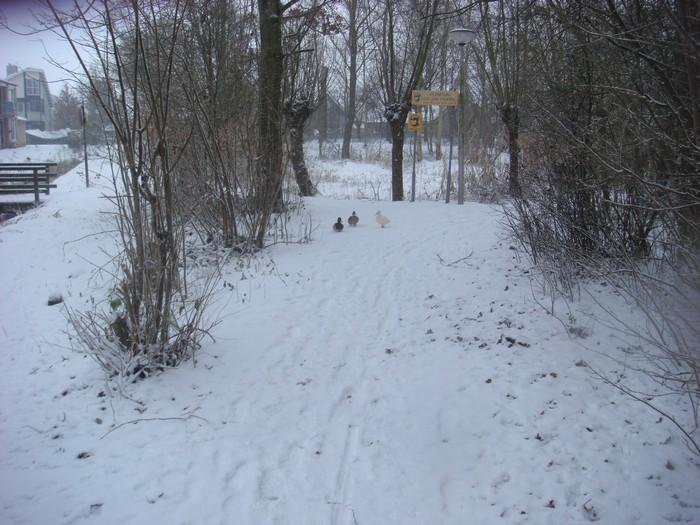 piershil-heemtuin-sneeuw-20dec2009-02