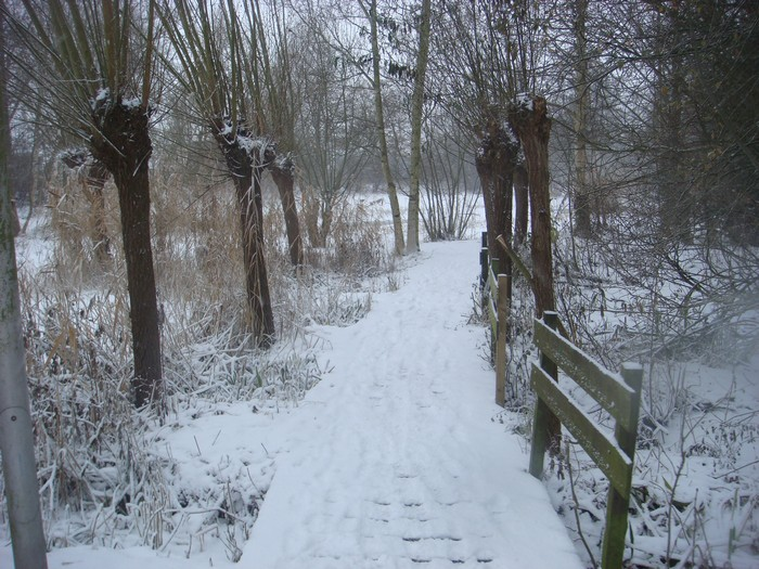 piershil-heemtuin-sneeuw-20dec2009-03