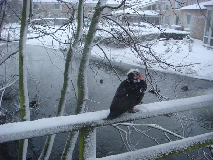 piershil-heemtuin-sneeuw-20dec2009-05