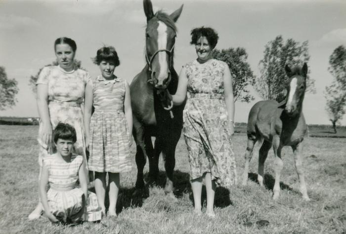 piershil-sluisjesdijk31-weide-paard-1958-01