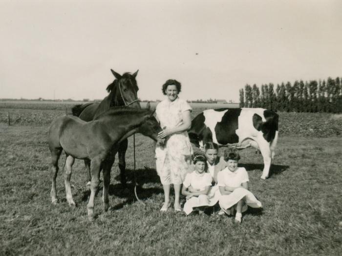piershil-sluisjesdijk31-weide-paard-1958-02