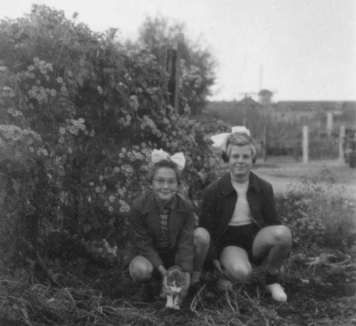 piershil-vanaf-reedijk-januari1951