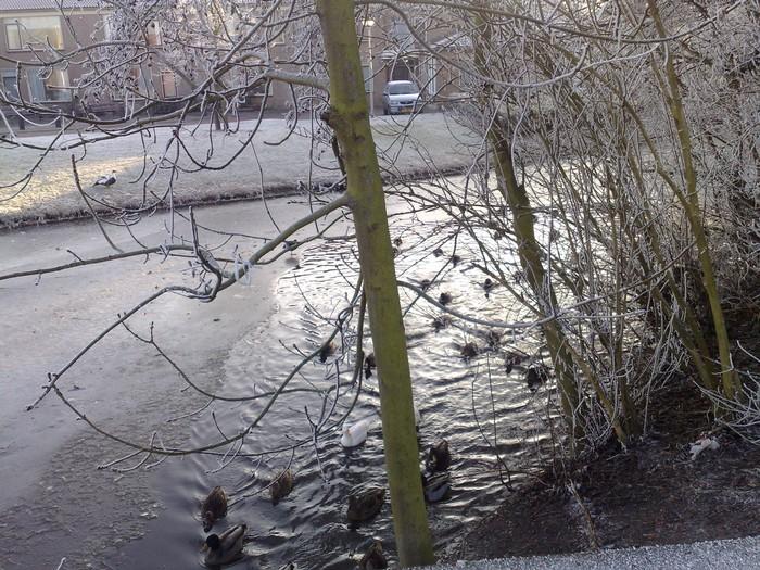 piershil-voorstraat-winter-9jan2009-02