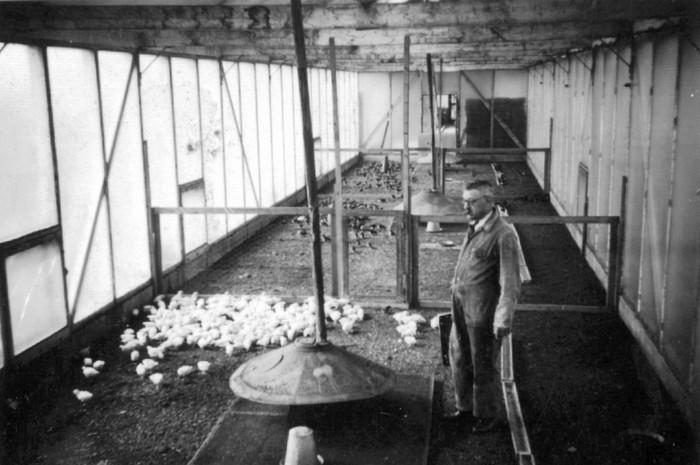 oudpiershilseweg-kuikens-1935-01