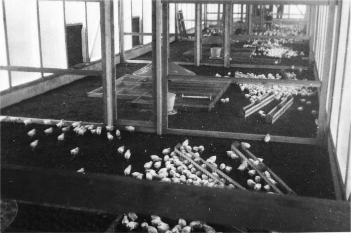 oudpiershilseweg-kuikens-1935-02