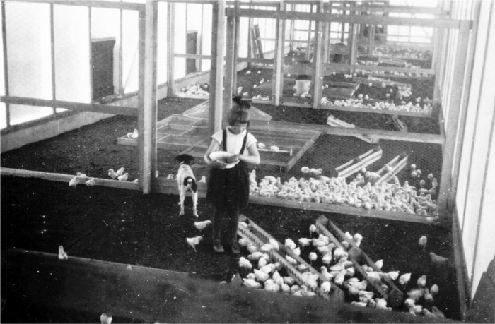 oudpiershilseweg-kuikens-1935-03