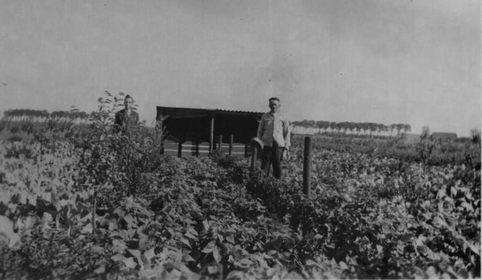 piershil-boomgaardverhorst-1947