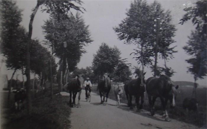 piershil-foto-kostverlorendijk-paarden-1934