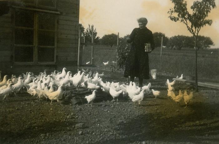 piershil-kippen-voeren-mevrdepijper