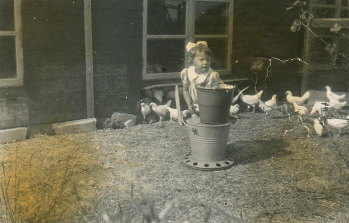 piershil-kippen-water-reinadepijper