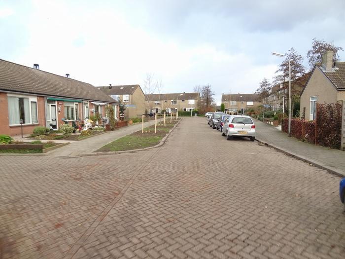 piershil-mauritsstraat-bomengekapt-nov2012-03