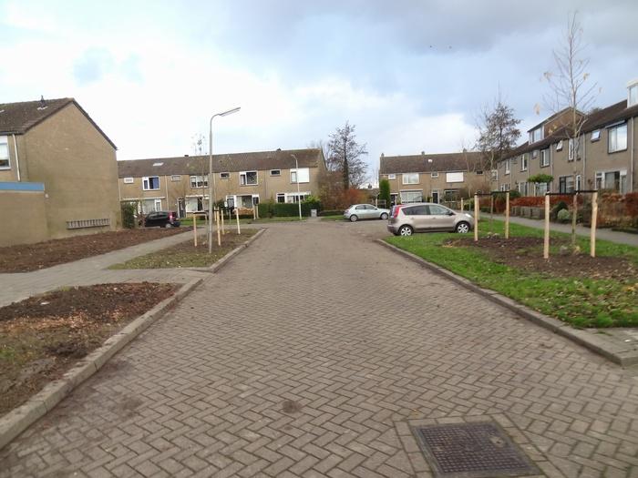 piershil-mauritsstraat-bomengekapt-nov2012-04