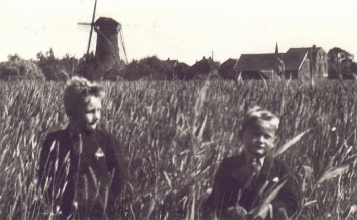 piershil-molendijk-korenveld-fambakker-1939