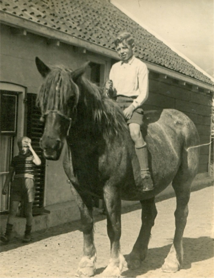 piershil-molendijk-paard-advanbergeijk