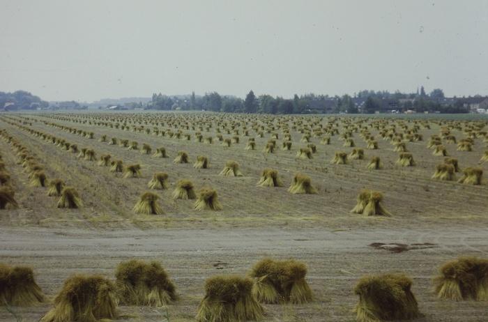 piershil-oudendijk-vlasschoof-circa1985-01