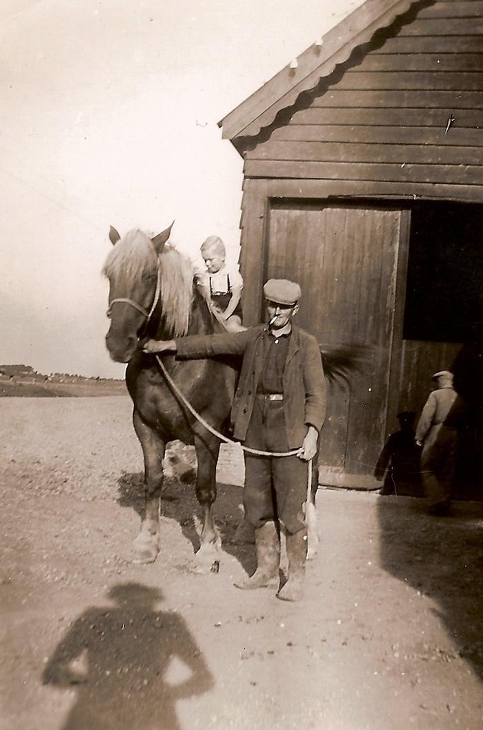 piershil-tonberkhout-oosthoek-paard-1947