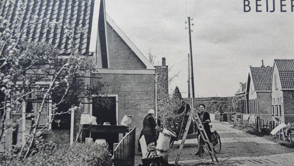 1938-nieuw-beijerland-inbloei-02