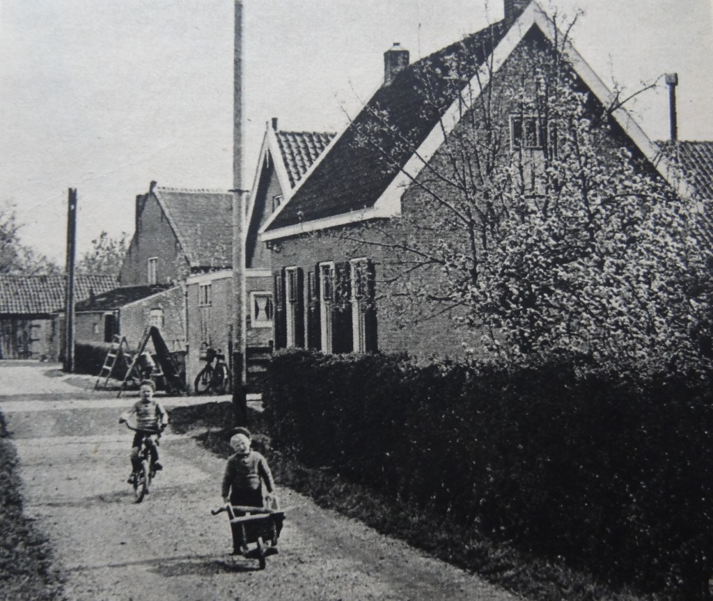 1938-nieuw-beijerland-inbloei-03