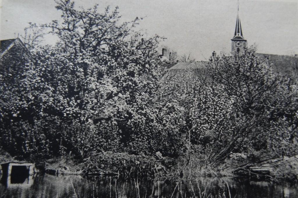 1938-nieuw-beijerland-inbloei-04