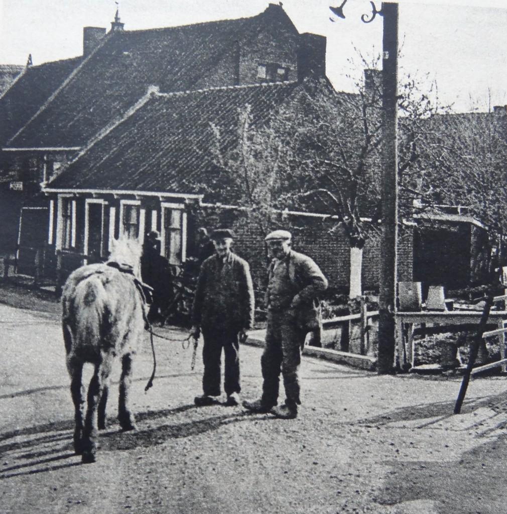 1938-nieuw-beijerland-inbloei-05
