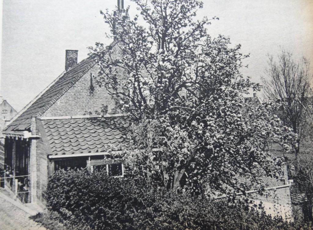 1938-nieuw-beijerland-inbloei-06