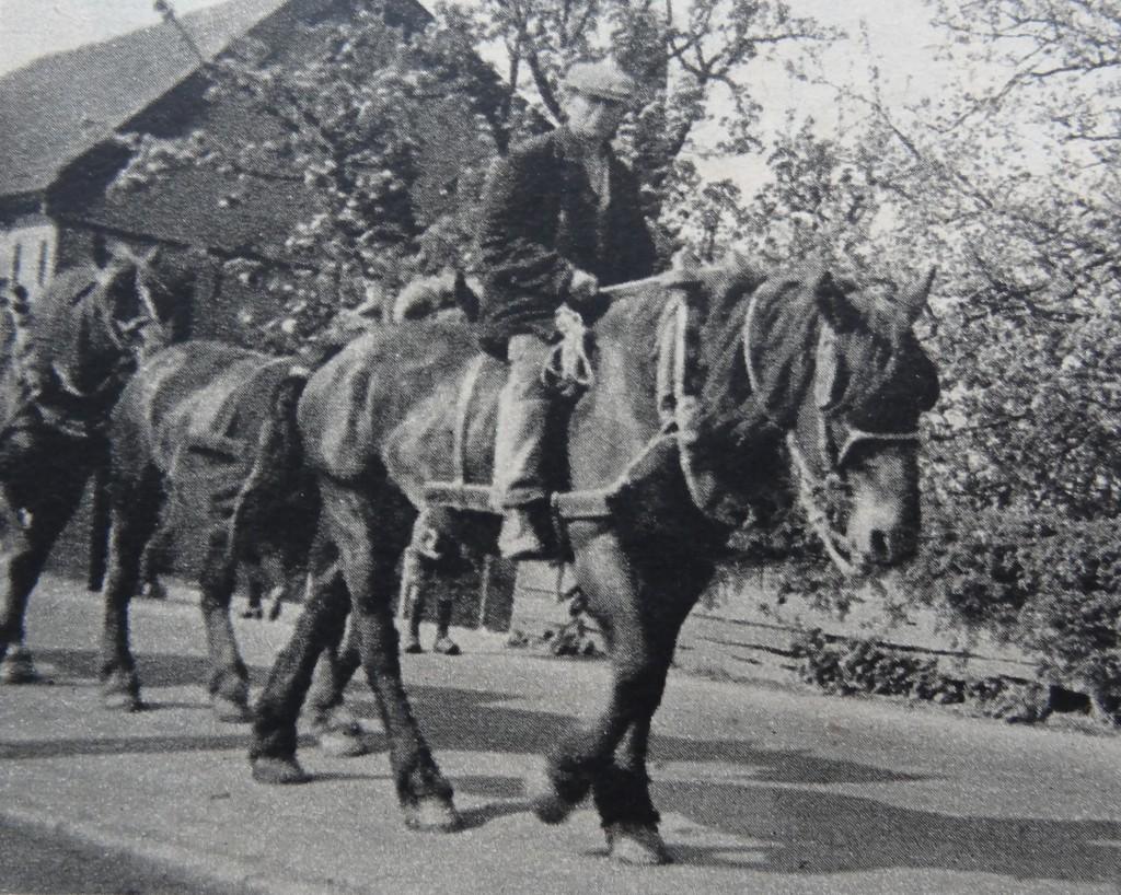 1938-oud-beijerland-inbloei-02