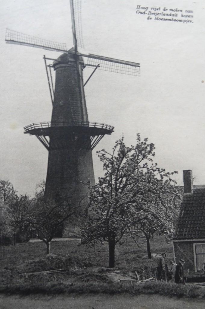 1938-oud-beijerland-inbloei-05