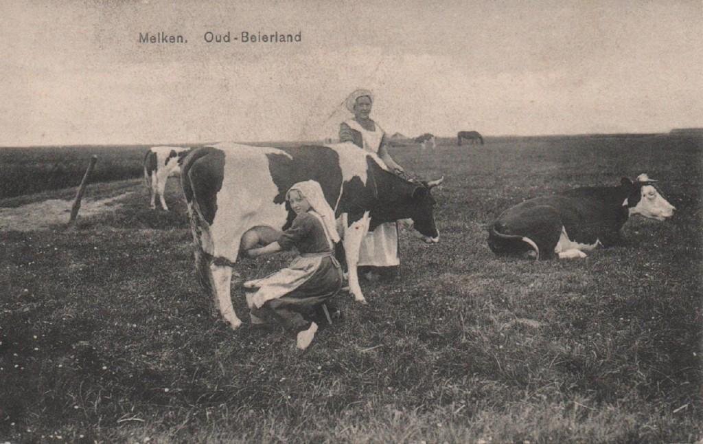 oud-beierland-melken